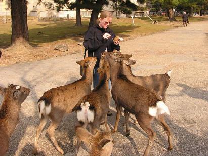 deers 5